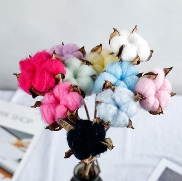 Natural Coloured Cotton